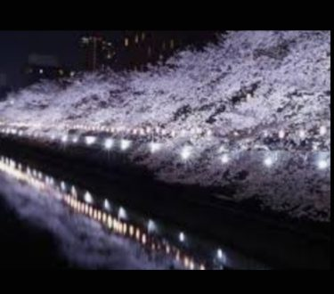 東京の花見おすすめスポット!家族や会社での宴会が楽しめる
