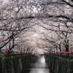 お花見の名所 目黒川の桜の楽しみ方!見どころやライトアップ・桜まつり