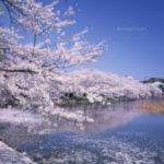 お花見の名所 上野恩賜公園の桜を楽しむ!ライトアップやイベントなど
