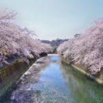 お花見の名所 大岡川プロムナード!桜祭り、クルーズ、ライトアップ