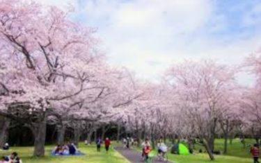 お花見の名所 代々木公園の桜!開花・見頃・お花見情報