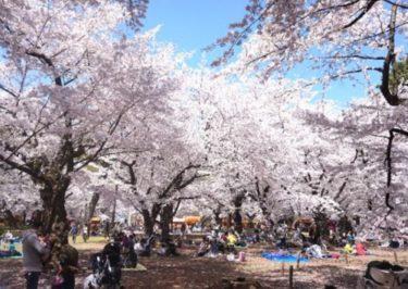 お花見の名所 大宮公園の桜!開花情報、ライトアップ、見どころ