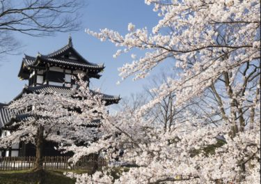 お花見の名所 高田公園の桜!開花・観桜会・夜桜ライトアップ
