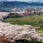 お花見 みちのく三大桜名所 北上展勝地の桜!桜まつり・開花情報