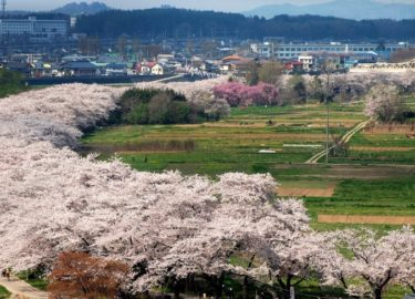お花見 みちのく三大桜名所 北上展勝地の桜!桜まつり、開花情報