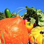 温野菜サラダ ダイエットレシピ!野菜がたっぷりとれて美容にもよい