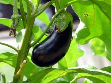 人気のなすダイエットレシピ!美味しいヘルシー茄子の料理