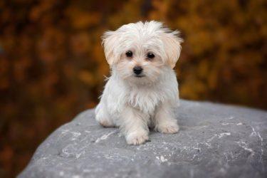 食べない愛犬に人気おすすめ美味しい無添加ドッグフード12選【最新】