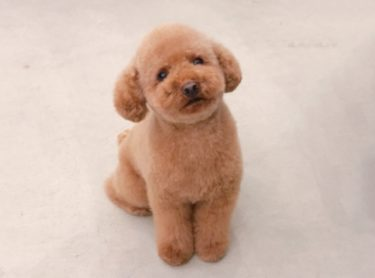 小型犬・子犬に人気おすすめ小粒のドッグフード8選!無添加で安心