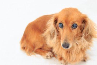 大型犬・中型犬に人気の無添加ドッグフード7選!粒が大きめで噛みやすい