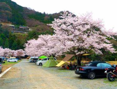 関東の人気おすすめ春キャンプ場10選!花見ができて景色がきれい